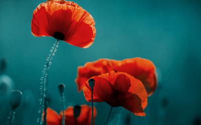 Innovator Maurice van Winden over zijn startup Floranti
